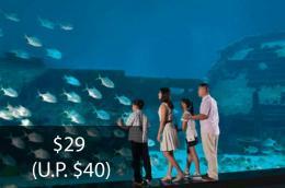 Seniors Enjoy Special Rates at S.E.A. Aquarium™