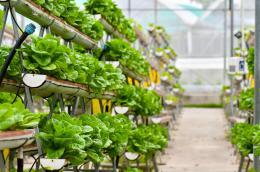 Urban Farming Series